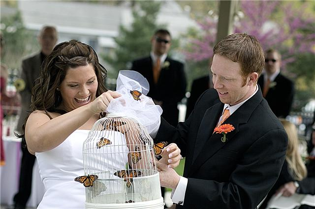 Wedding Butterfly Release Packages Wedding Butterflies